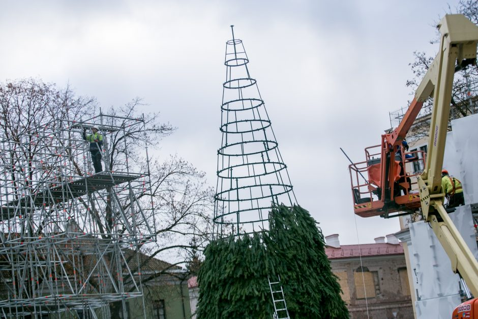 Kalėdinės eglutės ruošimo darbai