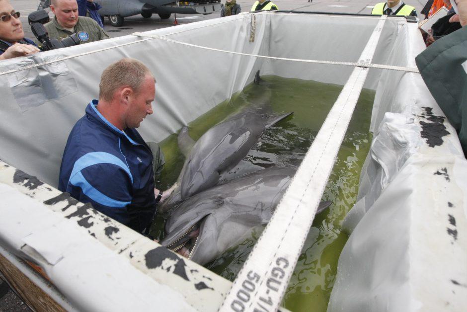 Į Klaipėdos delfinariumą grįžo gyvybė