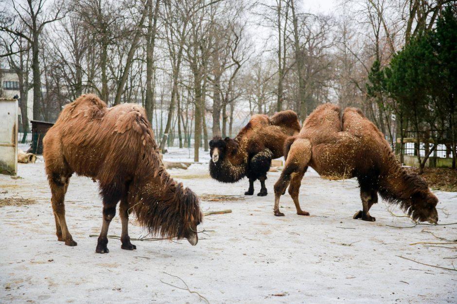 Paskelbtas naujas konkursas rekonstruoti zoologijos sodą Kaune (laukiami pasiūlymai)