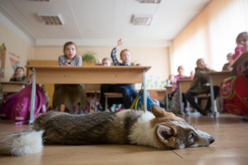 Kas Kaune ne vien šventės dieną myli šunis?