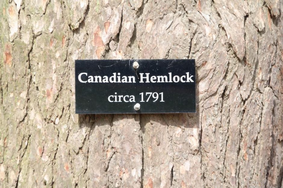 Lūžo G. Washingtono medis