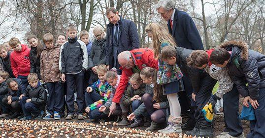 Bernardinų sode pasodinta 80 tūkstančių tulpių svogūnėlių