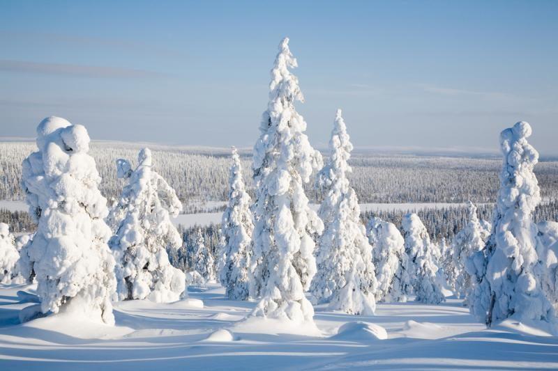 Tyrimas: kai kurie medžiai išgyveno ledynmetį