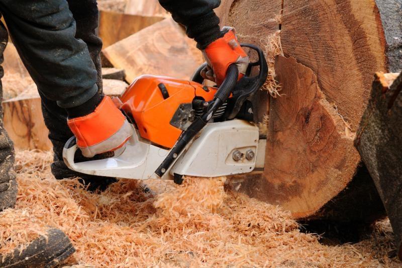 Savo mišką iškirtęs vyras policijai pranešė, kad tai – vagių darbas