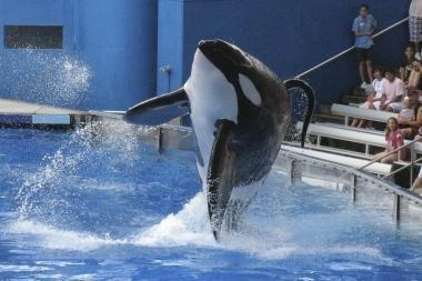 Pasirodymas Floridos delfinariume baigėsi mirtimi