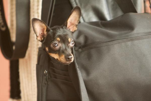Policija sulaikė įtariamąjį iš 7 aukšto išmetusį šunį