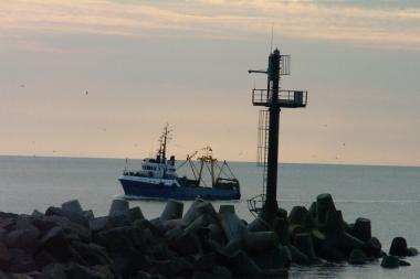 Kitąmet Baltijos silkių bus sužvejojama mažiau