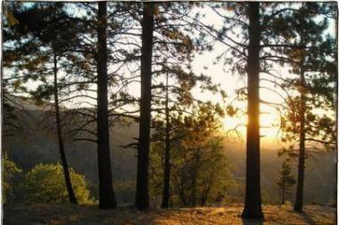 Panevėžiečiai poilsiaus tylos zona paskelbtame miške