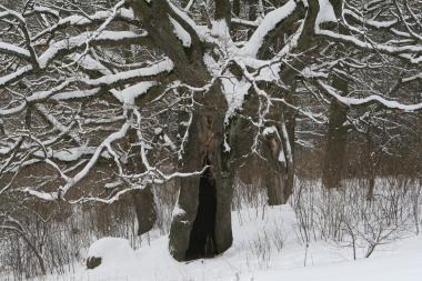 Savaitgalis - saulėtas, bet žiemiškai šaltas