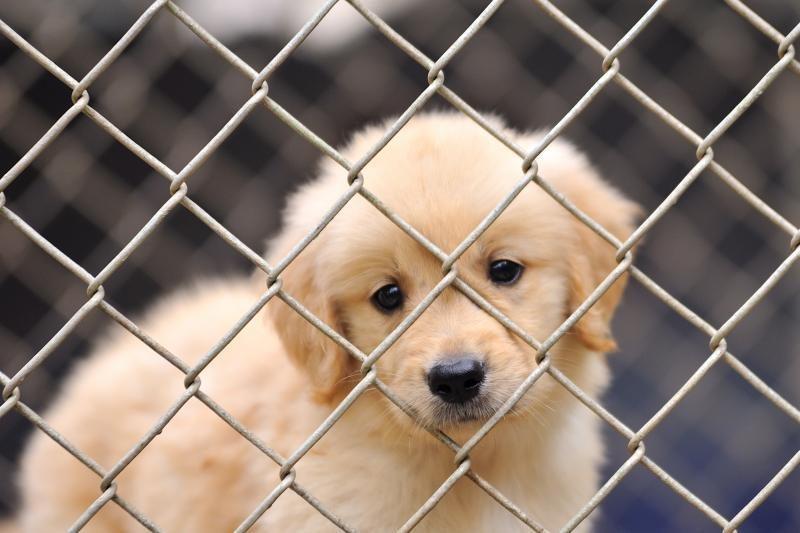 Uostamiesčio valdžia sklypo gyvūnų kapinėms dairysis rajone