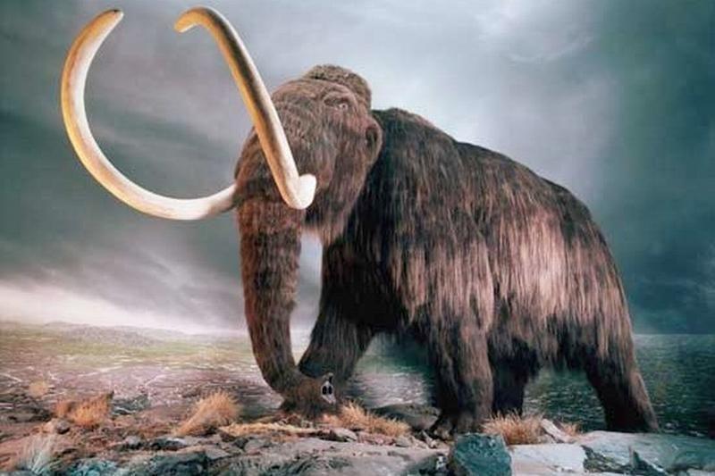 Rusijoje vienuolikmetis atrado 30 tūkst. metų amžiaus mamutą