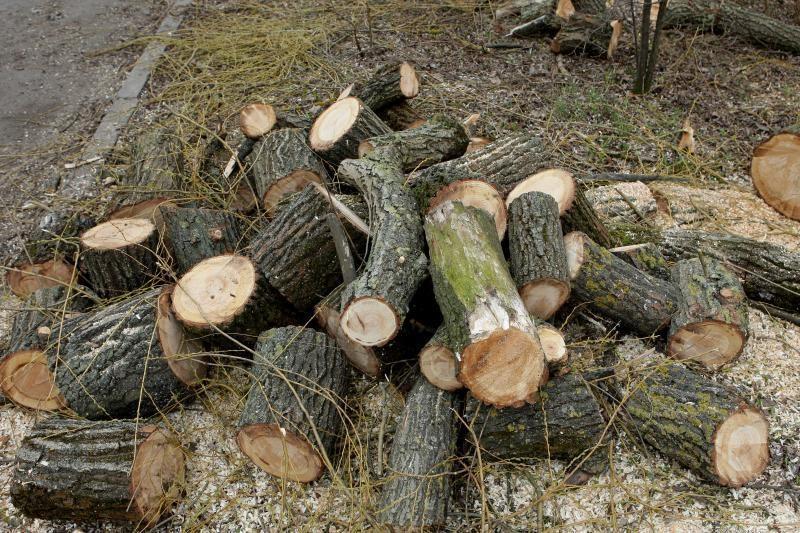 Kauno rajono gyventojams skyrė malkų už 58 tūkst. litų