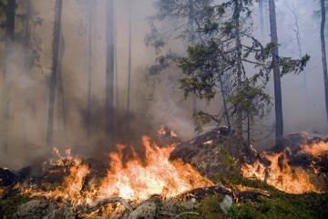 Miškuose – didelė gaisro tikimybė (papildyta)