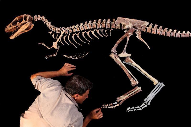 52 proc. lenkų mano, kad žmonės žemėje gyveno kartu su dinozaurais