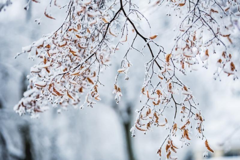 Savaitės pradžioje orai trumpam atšils, po to vėl sugrįš žiema