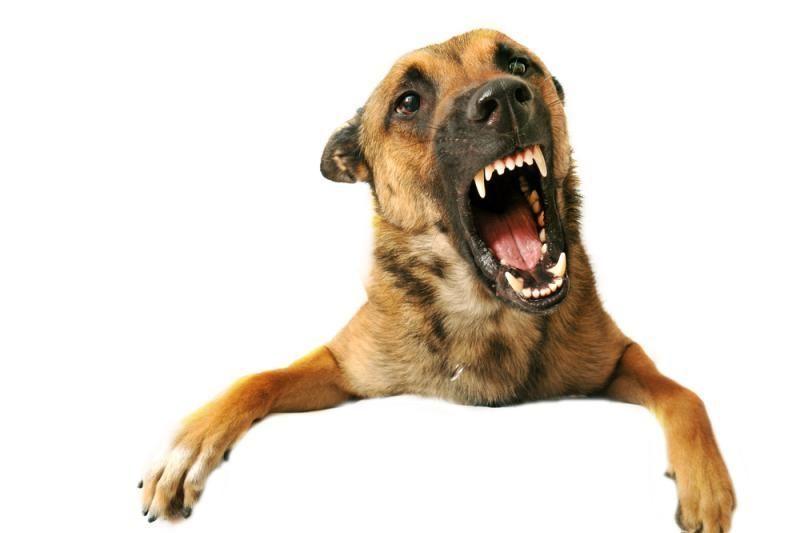 Kauno rajone rastas šunų sudarkytas moters lavonas