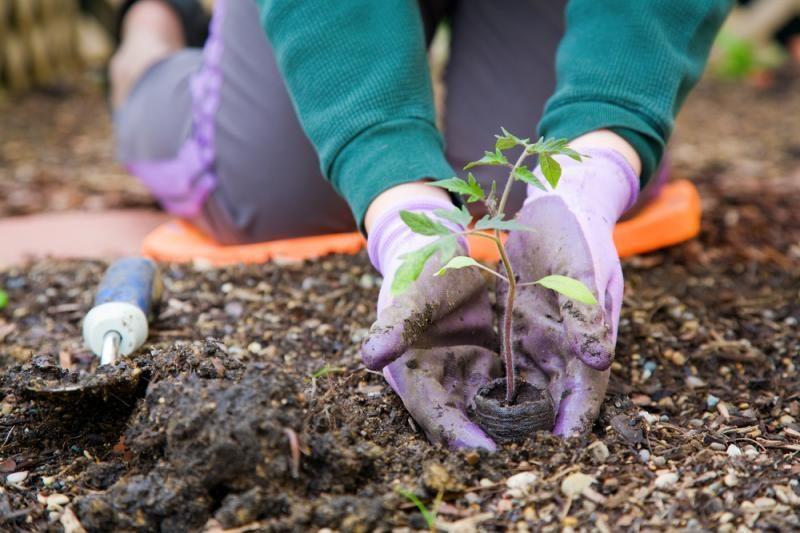 Ar labai senas dirvožemis po mūsų kojomis?