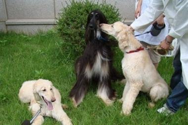 Klonuotas šuo tapo tėvu