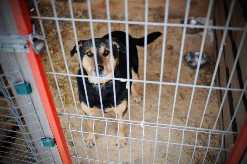 Atnaujinta gyvūnų (šunų ir kačių) registracija Vilniaus mieste