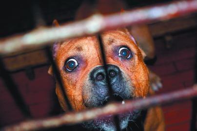 Policija drausmino šunų savininkus