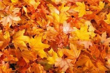 Po rudeniniais lapais - teritorijos ginčas