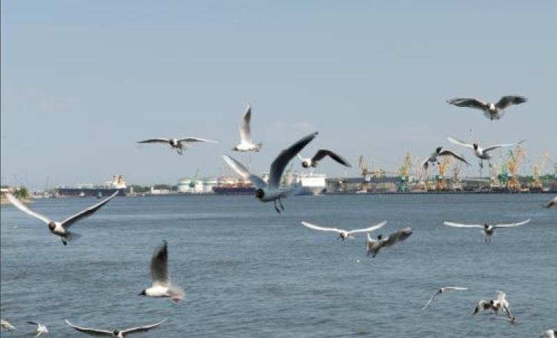 Giliavandenis uostas vėl planuojamas Klaipėdoje?