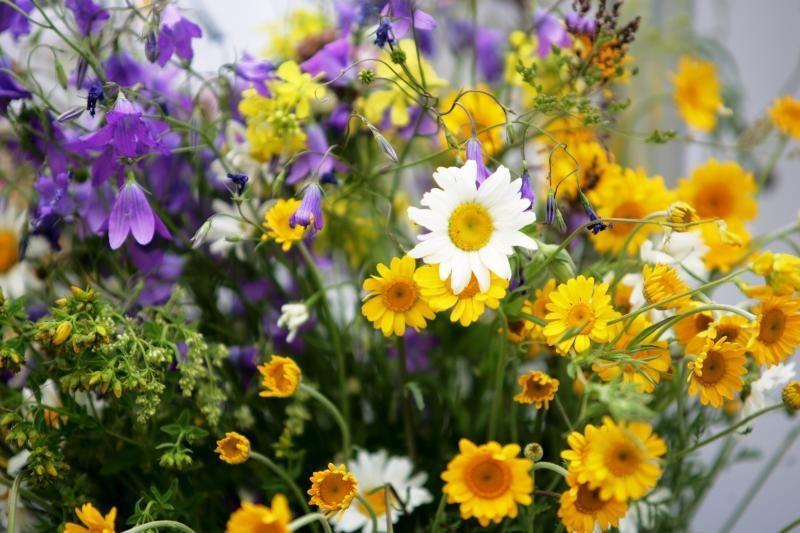 Lietuviškos gėlės stengiasi konkuruoti su olandiškomis