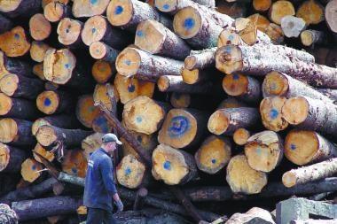 Molėtuose įkliuvo medienos grobstytojai