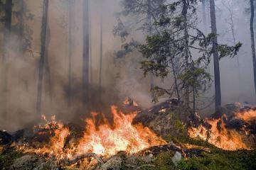 Turkijoje siaučia miško gaisras