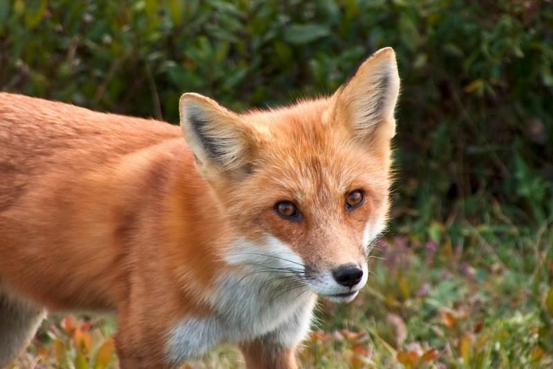 Medžiotojas apie laukinius gyvūnus: skaičiai traukiami iš oro
