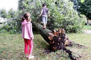 Kvaila biurokratija dėl sutrešusių medžių