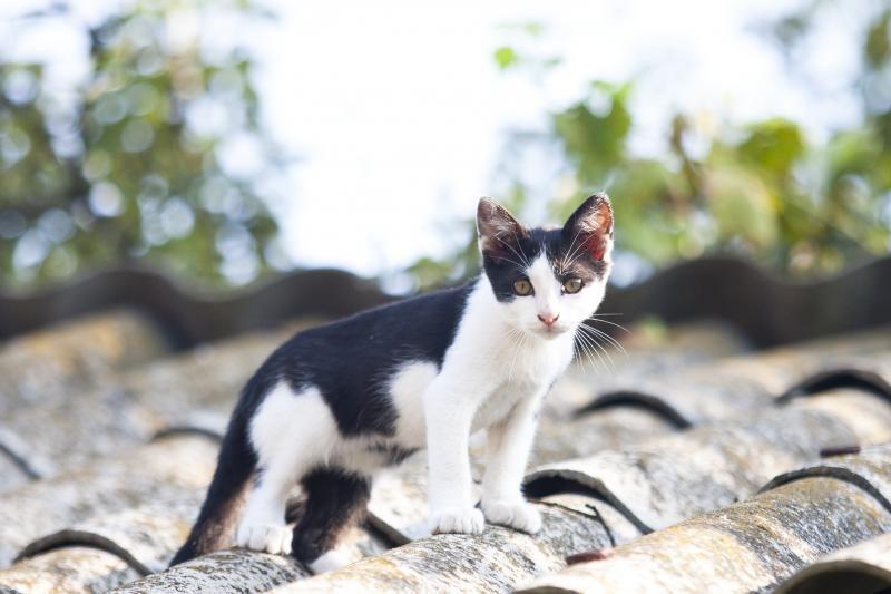 Balkone kelias paras kalintą katiną ėmėsi gelbėti kaimynai