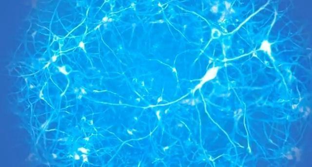 Akmens amžiaus smegenys informacijos amžiuje