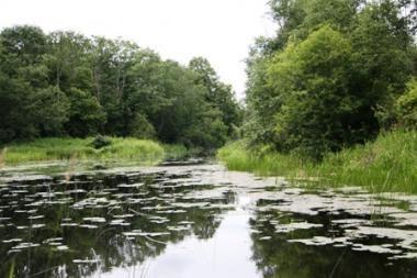 Nerekomenduojama maudytis Lėvens upėje