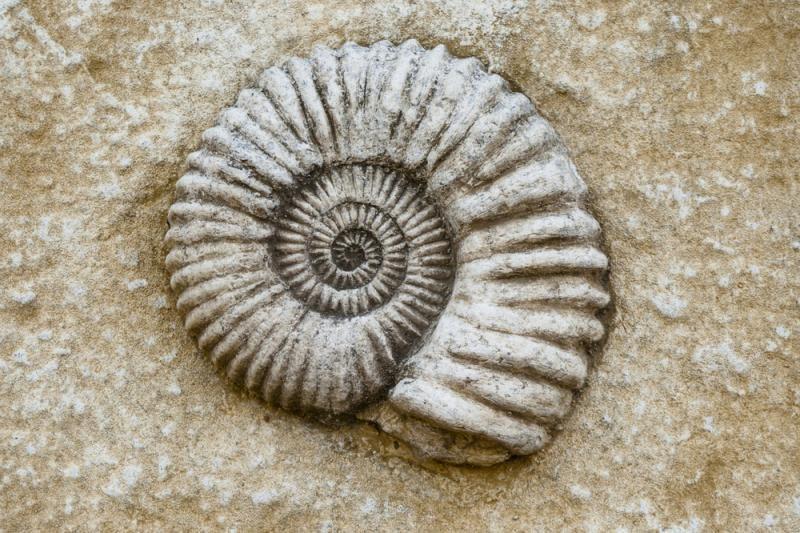 Saugomos teritorijos slepia milijonų metų amžiaus fosilijas
