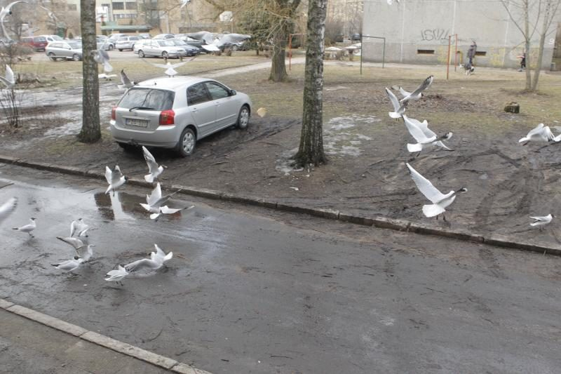 Susipažinkite: sostinės daugiabučio kiemo globotiniai - kirai