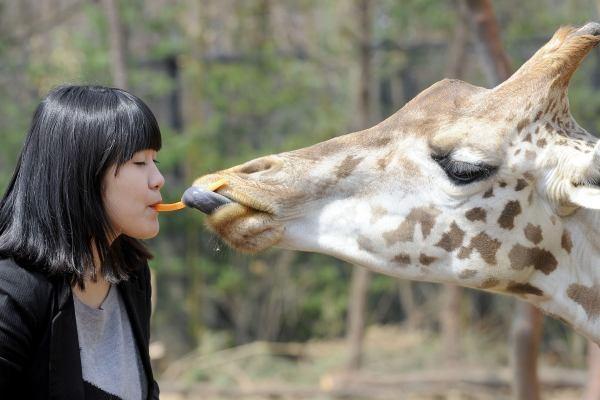 Liežuvis gyvūnams gali atstoti ne vieną įrankį
