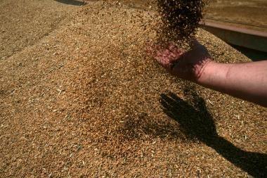 """""""Agrowill Group"""": muitų panaikinimas grūdų kainos nesumažins"""