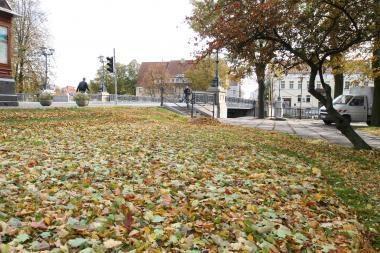 Kiemsargiai turės sušluoti po dvi tonas lapų