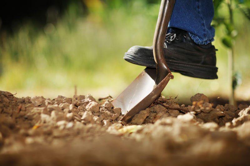 Prienuose kasant žemę rasti žmogaus kaulai