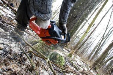 Per dvi savaites išaiškintas 21 neteisėtas miško kirtimo atvejis