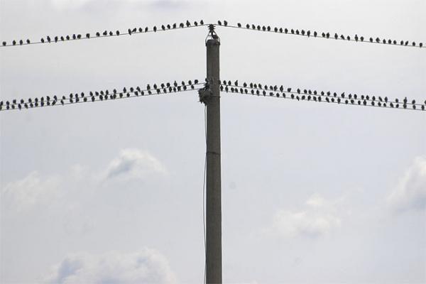 Vilniečiai išlydės paukščius