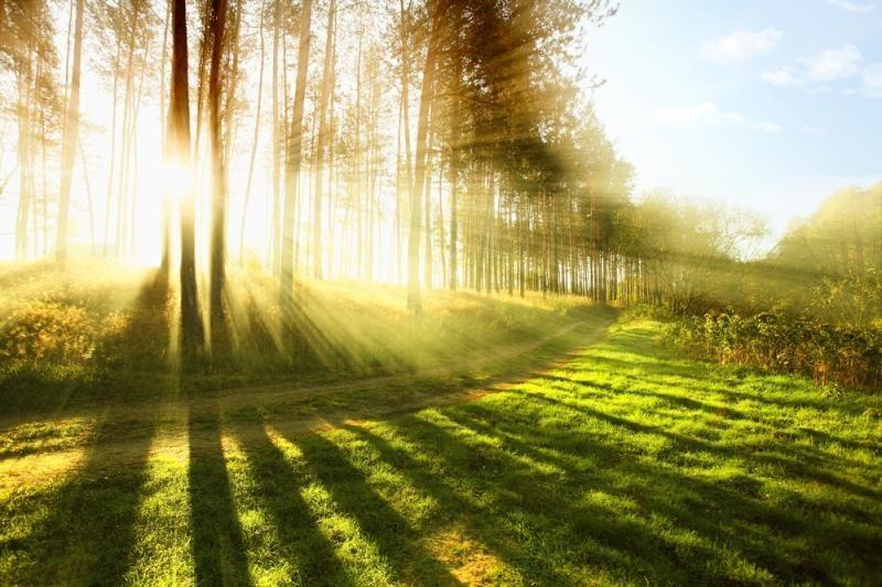 Medžių rievėse – didžiulio paslaptingo kosminio sprogimo pėdsakai