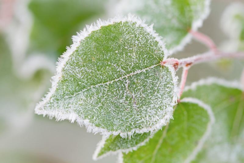 Šaltis Lietuvoje jau pareikalavo aukų