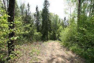 Trakų rajono miške rasti žmogaus kaulai