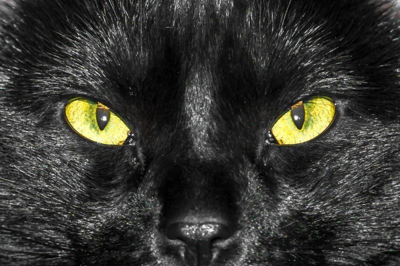 Vaizdo siužete pagauta lojanti juoda katė?