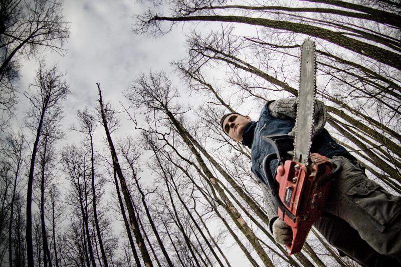 Šalies miškuose mažėja neteisėtų kirtimų