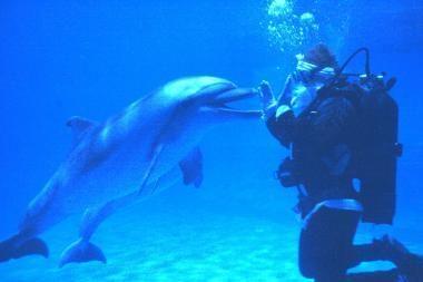 Delfinai sulaukė Kalėdų Senelio
