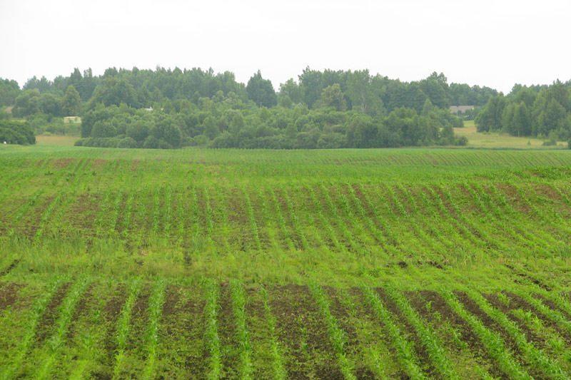 Paramos siekiantys žemdirbiai gali griebtis fiktyvių sandorių