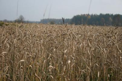 Orų išdaigos sodininkams atnešė milijoninius nuostolius